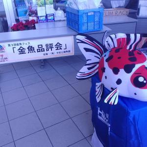 金魚フェス!!!その1