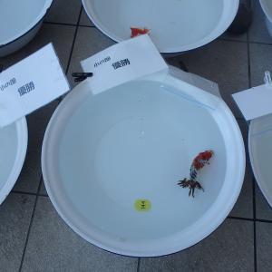 金魚フェス!!!その5