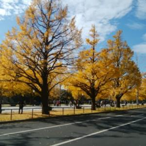 東京・大手町 2019年12月初旬の様子🍂