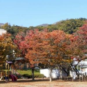 素晴らしい秋なのに
