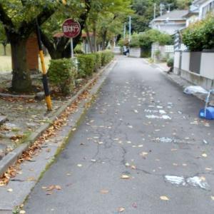 今年も早々落葉が始まりました。