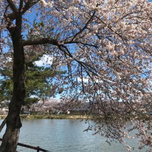すでに桜は散っていますが…