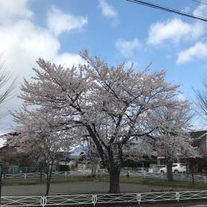 桜を見ながら…