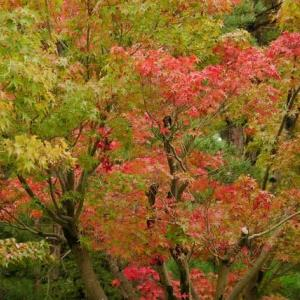公園の秋を探して 五十公野公園