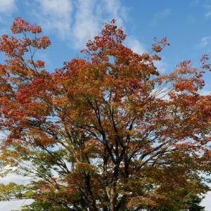村松公園 紅葉散策