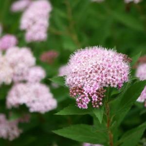 似たような花