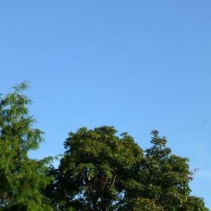 ヒガンバナ咲きました