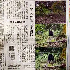 クマも人里が好き(かな)