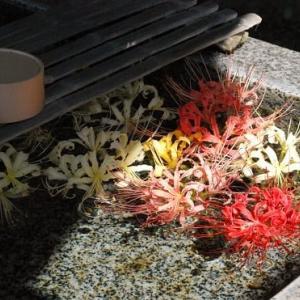 #6795 西方寺の曼珠沙華