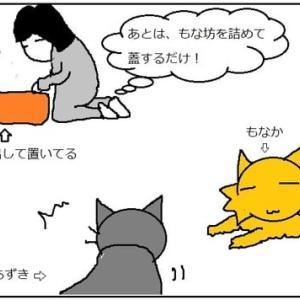 ワクチンに行く猫