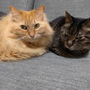 仲良しからの猫パンチ