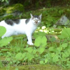 猫と木漏れ日と