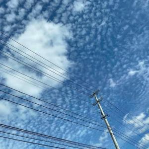 青い空とうろこ雲に誘われて