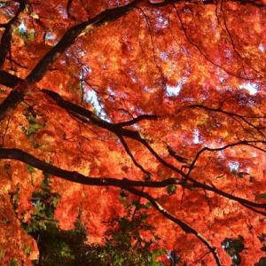 賀茂神社のイロハモミジが素敵すぎたという話