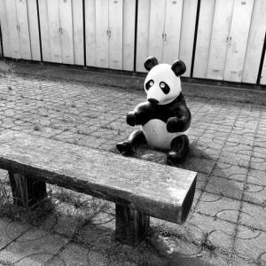 パンダに会える昭和的な団地 〜 モノクロームのまち 116 〜