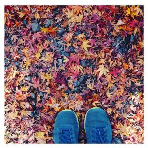 紅葉終わりでも紅葉を楽しめる毘沙門堂