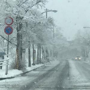 朝からずっと雪降り(^◇^;)