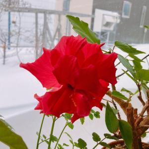 大雪でした(^◇^;)