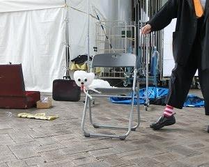 「サカハロ大道芸フェスティバル2019」…若宮広場へ…山本光洋さんを「みにいこうよう!」