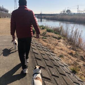 小糸川散歩
