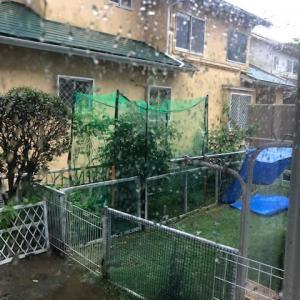 激しい雨です!