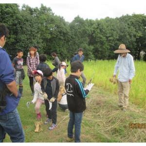 稲刈りはさがけ体験とセロリ苗植え