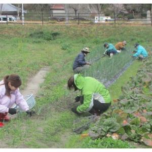 畑の整備と食事会
