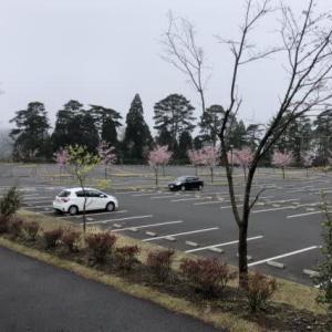 2020春・九州二百名山&三百名山登山ツアー:4日目霧島神宮
