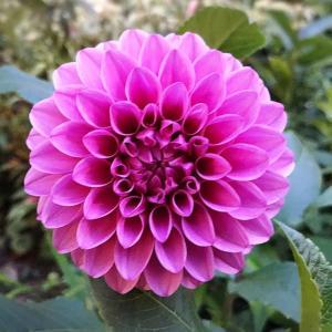 晴海トリトンガーデン 8月のお花と…