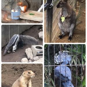 江戸川区自然動物園で癒される