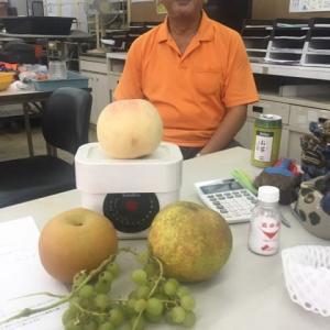 【ナルナル菌で栽培した「大きな桃」】🍑