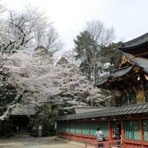 国宝妻沼聖天山の桜を観る