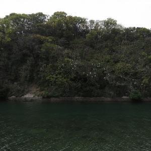 須賀川河口のサギ