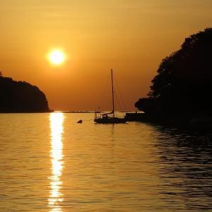 赤松の夕陽