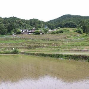 稲積花菖蒲園