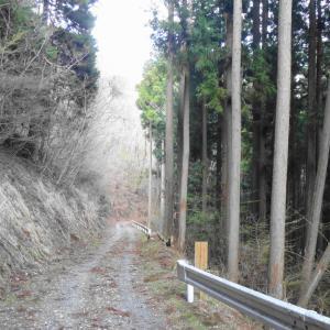 林道 道坂菜畑線(山梨県道志村)