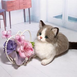♪ラグドールの子猫が誕生しました