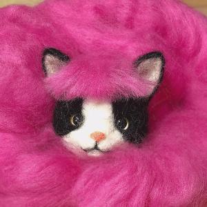 ♪ハチワレ猫さん