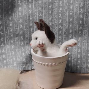 ♪猫制作中と今日のランチ