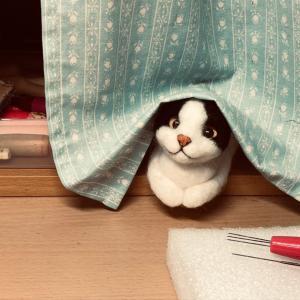 ♪ハチワレ猫