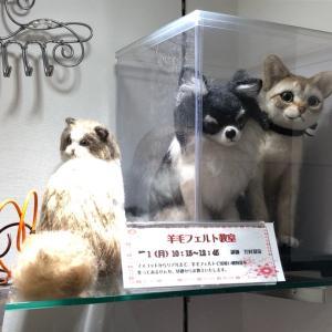 ♪ららぽーと富士見さんに羊毛っ子を展示させて頂いてます