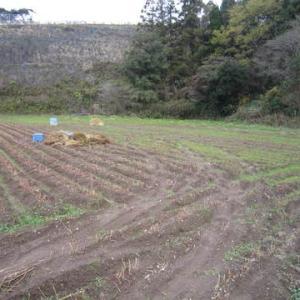 蕎麦の刈り取り終了