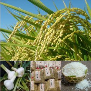 モミで保管中の特別栽培米