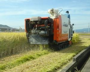 きょうで稲刈り最終日