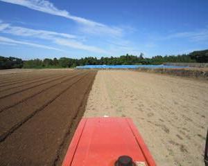 ジャガイモの植え付け終了