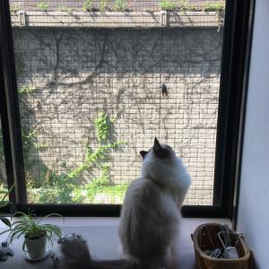 柚子、お留守番