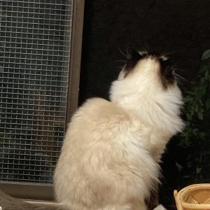 上の階の猫ちゃん