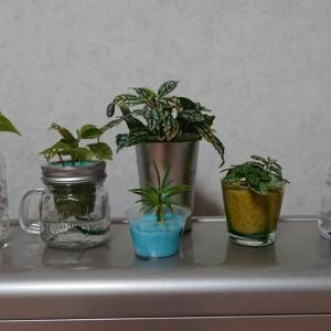 ☆うちの植物☆