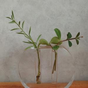 ✩観葉植物好きです✩