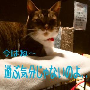 仙台東口イリス201911/13 にゃんこBAR